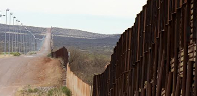 Border fence and grass and shrubs along dirt road